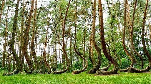 Khu vực kỳ bí khu rừng ma ám Hoia Baciu